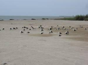 Birds on the beach in San Andres