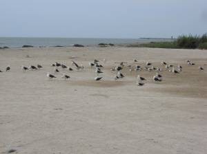 Birds on the beach in San Andres