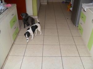 Roxi and Manchita after their morning walk