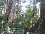 peruvian_jungle