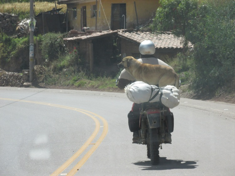 dog on motorcycle in Peru